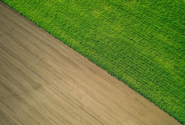 Co zagraża uprawom zbóż?